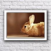Картини с животни